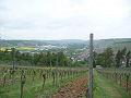 Weinwanderung Würzburg-Randersacker - Bild 2