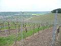 Weinwanderung Würzburg-Randersacker - Bild 4
